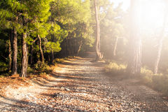 Walking Path in Forest Royalty Free Stock Photography
