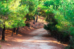 Walking Path in Forest Royalty Free Stock Images