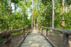 Walking path through forest park Stock Images