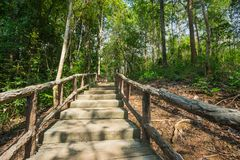 Walking path through forest park Royalty Free Stock Image