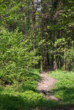 Walking path in forest a t morning with beautiful sunbeams. Royalty Free Stock Photos