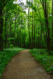 Walking path in forest. The way leads straight ahead through the forest under the leaves roof Royalty Free Stock Photo