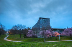 Cherry Blossom and Old Office Building Royalty Free Stock Image
