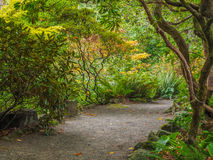Walking Path in Garden Setting of Ferns and Rhododendrons Stock Images