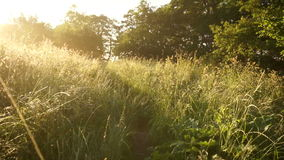 Walking path grass sunrise  Stock Photo