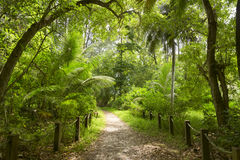 Walking path in green forest. Saychelles. Mahe island. Stock Photography