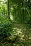 Walking path in the jungle. Wide shot of a walking path in the rain-forest or tropical jungle Stock Photo