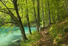 Walking path by the lake. Forest path by a beautiful lake with clear water stock photography