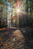 Walking path in Lake johnson park of Raleigh, NC. During fall season Royalty Free Stock Photos