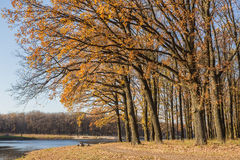 Walking path in the lake side, autumn Royalty Free Stock Photo