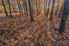 Walking path in the lake side, autumn Royalty Free Stock Photos