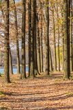 Walking path in the lake side, autumn Royalty Free Stock Photography