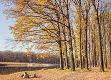 Walking path in the lake side, autumn Stock Images