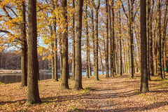 Walking path in the lake side, autumn Stock Photos