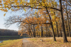 Walking path in the lake side, autumn Stock Image