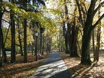 Path , benchand beautiful autumn trees, Lithuania stock photography