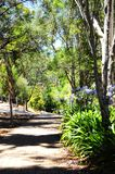 Walking path leading down to Australian bushland, Adelaide Hills. Walking path leading down to Australian bushland surrounded by native eucalyptus gum trees in stock photo