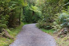 Walking path leading to rain forest tropical jungle Stock Images