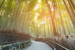 Walking path leading to Zen Bamboo jungle. Japan Osaka royalty free stock image