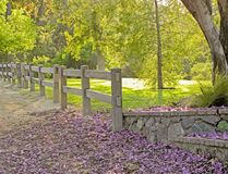 A walking path in the meadows with purple flowers laying the pathway. stock images