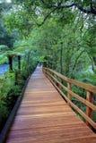 Walking path in milfordsound fiordland national park new zealand Royalty Free Stock Image