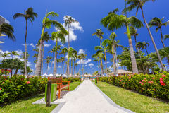 Walking path with palm trees at tropical beach Royalty Free Stock Photography
