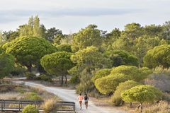 Walking path through pine forest Algarve Portugal royalty free stock images