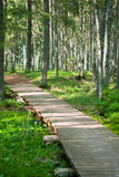 Walking path in the pine forest Royalty Free Stock Images