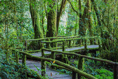 Walking Path in Rain Forest at Doi Intanon Royalty Free Stock Image