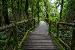 Walking Path in Rain Forest at Doi Intanon, Royalty Free Stock Image