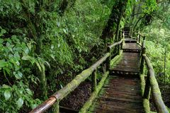 Walking Path in Rain Forest at Doi Intanon, Thailand Royalty Free Stock Photo