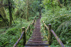 Walking Path in Rain Forest at Doi Intanon, Thailand Stock Photography