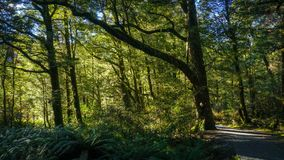 Walking path in rainforest stock photography