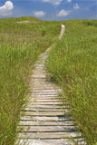 Walking path through the sand dunes. Wooden hiking path through grassy dunes Stock Images