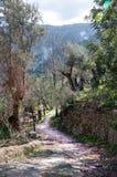 Walking path Soller Royalty Free Stock Image