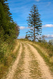 Walking path and spruce Stock Photos