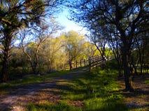 Walking Path Stock Image