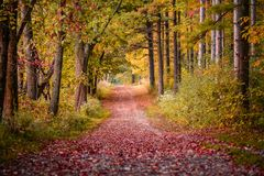 Walking path at State Park in Peak Fall Color. Walking path in Wisconsin during peak Fall color Royalty Free Stock Photo