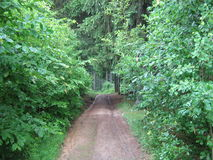 Walking path in the summer forest Stock Images
