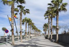 A walking path on a sunny day in Valencia between the palm trees. La Malvarrosa beach palm trees promenade in Spain. A walking path on a sunny day in Valencia Stock Image