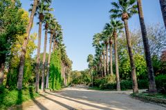 A walking path surrounded by tall palm trees in a small public park in Nicosia Stock Photo
