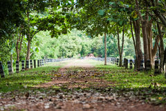 Walking Path to Jedkod Waterfall, Saraburi, Thailand Stock Photo