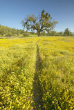 Walking path to a lone tree through a colorful bouquet of spring flowers blossoming off Route 58 on Shell Creek road, West of Bake Royalty Free Stock Photo