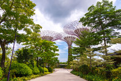 Walking path to Supertrees Grove Stock Image