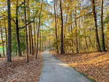 Walking path in the trees through a park royalty free stock image