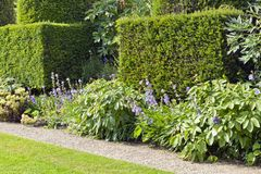 Walking path by trimmed topiary shrubs and flowers . Trimmed yew hedge, flowering plants by a small stone path and lawn, in a summer English garden stock photos
