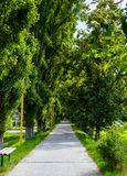 Walking path under the Linden tree crowns. Lovely nature background stock photo