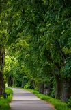 Walking path under the Linden tree crowns. Lovely nature background royalty free stock image