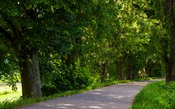 Walking path under the Linden tree crowns. Lovely nature background Stock Photos