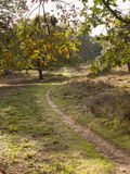 Walking path on Veluwe. Between Stroe and Garderen Royalty Free Stock Images